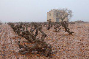 viñas vega tolosa
